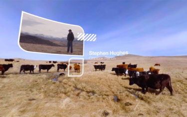 Cattle on open ranch land with superimposed graphics from VR experience