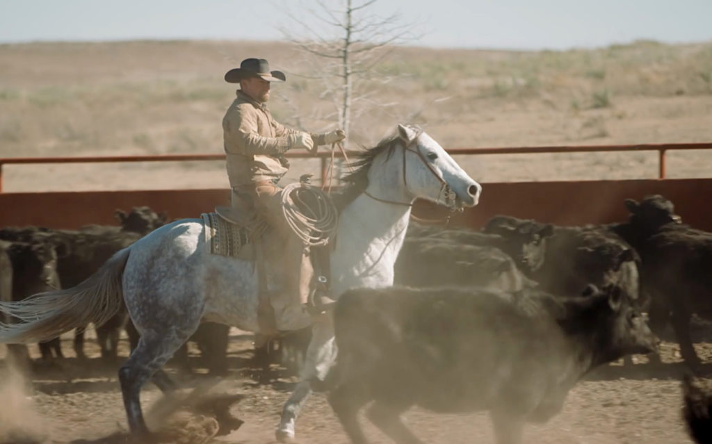 Rancher on horseback corralling cattle with dust flying