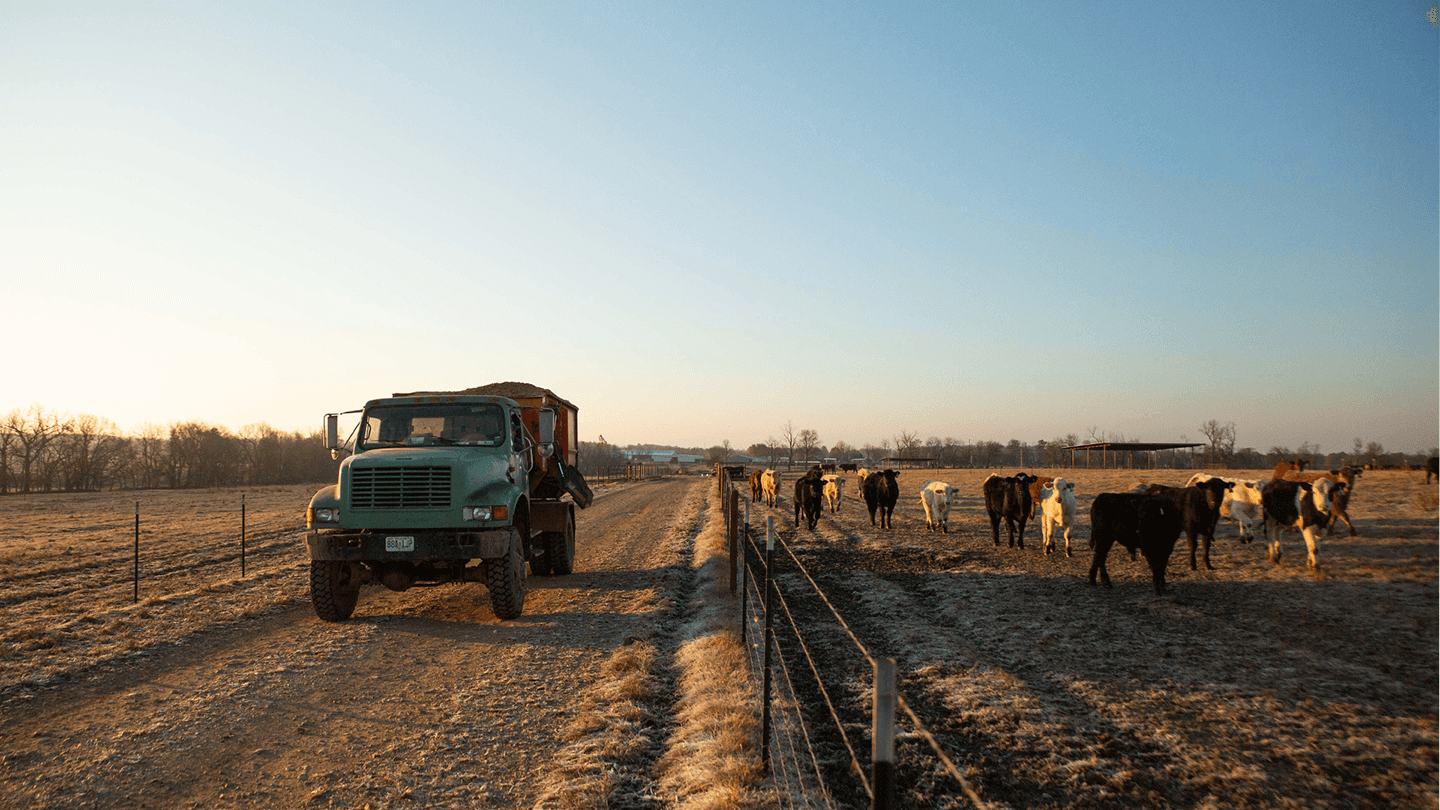 Merck Animal Health Works Cattle Operation