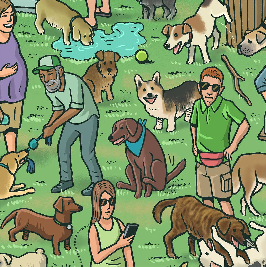 Illustration of dogs mingling in park. Dog in center dragging his bottom on the grass.