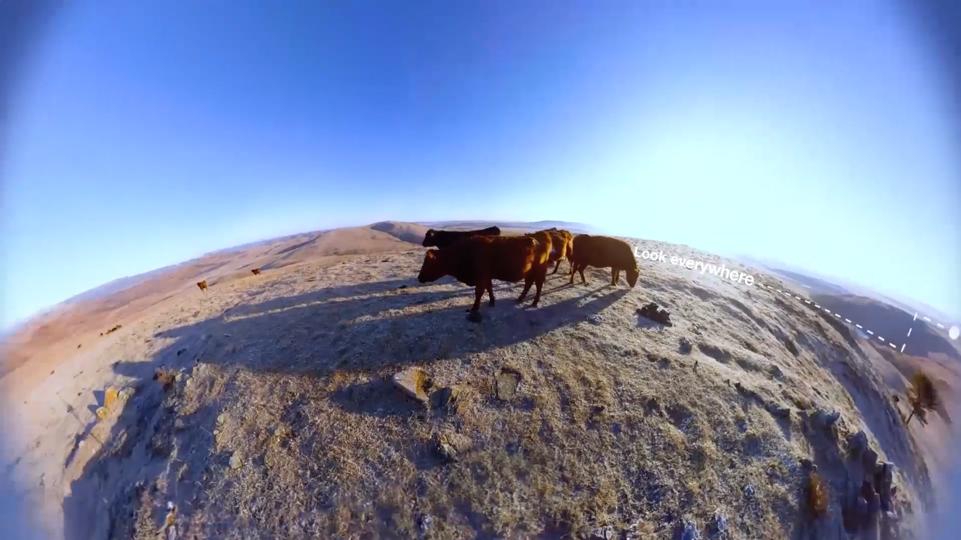 360˚ view of cattle