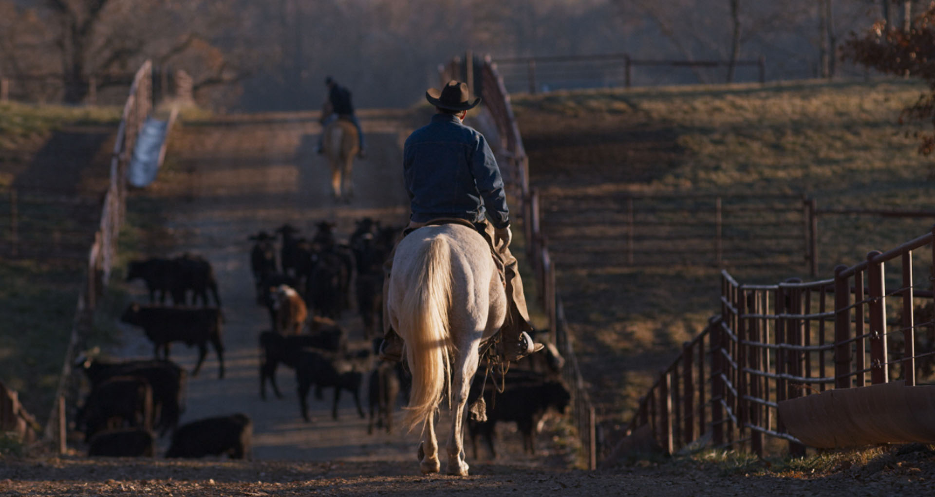 Merck Animal Health Producer riding on horseback herding cattle