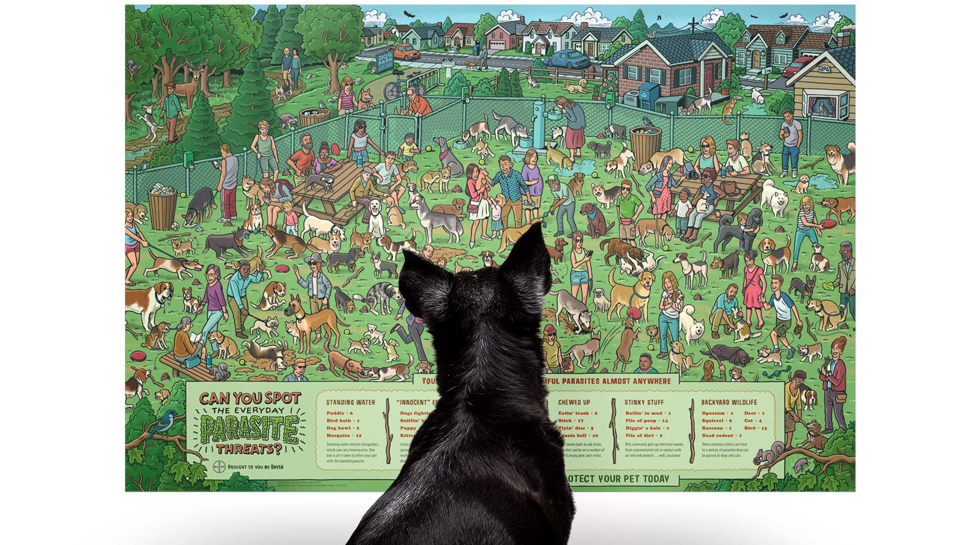 Image of little dog looking at an illustrated poster.