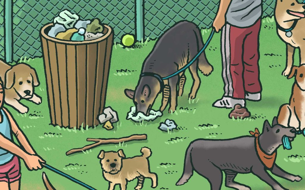 Various dogs mingling in dog park. A dog in the center noses through trash.